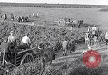 Image of grape harvest France, 1931, second 42 stock footage video 65675031149