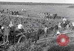 Image of grape harvest France, 1931, second 43 stock footage video 65675031149
