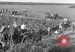 Image of grape harvest France, 1931, second 44 stock footage video 65675031149