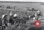 Image of grape harvest France, 1931, second 45 stock footage video 65675031149
