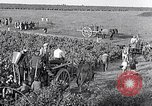Image of grape harvest France, 1931, second 46 stock footage video 65675031149