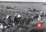Image of grape harvest France, 1931, second 47 stock footage video 65675031149
