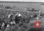 Image of grape harvest France, 1931, second 48 stock footage video 65675031149