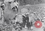 Image of grape harvest France, 1931, second 51 stock footage video 65675031149