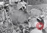 Image of grape harvest France, 1931, second 53 stock footage video 65675031149