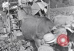 Image of grape harvest France, 1931, second 54 stock footage video 65675031149