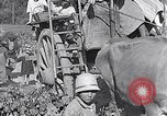 Image of grape harvest France, 1931, second 57 stock footage video 65675031149