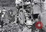 Image of grape harvest France, 1931, second 58 stock footage video 65675031149
