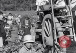 Image of grape harvest France, 1931, second 60 stock footage video 65675031149