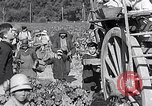 Image of grape harvest France, 1931, second 61 stock footage video 65675031149
