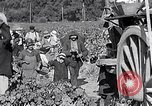 Image of grape harvest France, 1931, second 62 stock footage video 65675031149
