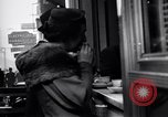 Image of Quick lunches in New York City New York City USA, 1939, second 3 stock footage video 65675031540