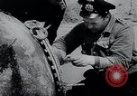 Image of German Navy explosives experts destroy marine mines Germany, 1944, second 19 stock footage video 65675031603