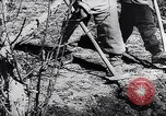 Image of Spanish farmers Spain, 1941, second 11 stock footage video 65675031638