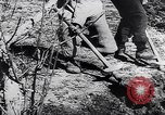 Image of Spanish farmers Spain, 1941, second 12 stock footage video 65675031638