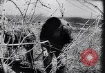 Image of Spanish farmers Spain, 1941, second 29 stock footage video 65675031638