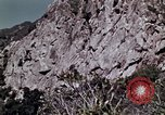 Image of peregrine falcon California United States USA, 1970, second 2 stock footage video 65675031951