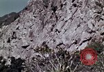 Image of peregrine falcon California United States USA, 1970, second 3 stock footage video 65675031951