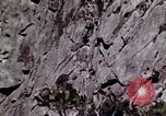 Image of peregrine falcon California United States USA, 1970, second 5 stock footage video 65675031951