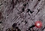 Image of peregrine falcon California United States USA, 1970, second 6 stock footage video 65675031951