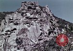 Image of peregrine falcon California United States USA, 1970, second 12 stock footage video 65675031951