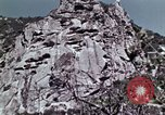 Image of peregrine falcon California United States USA, 1970, second 14 stock footage video 65675031951