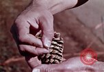 Image of reforest areas California United States USA, 1970, second 23 stock footage video 65675031952