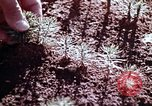 Image of reforest areas California United States USA, 1970, second 25 stock footage video 65675031952