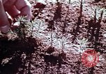 Image of reforest areas California United States USA, 1970, second 28 stock footage video 65675031952
