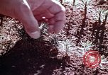 Image of reforest areas California United States USA, 1970, second 29 stock footage video 65675031952