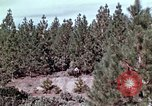 Image of reforest areas California United States USA, 1970, second 36 stock footage video 65675031952