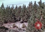 Image of reforest areas California United States USA, 1970, second 37 stock footage video 65675031952