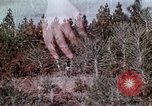 Image of reforest areas California United States USA, 1970, second 38 stock footage video 65675031952