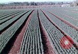 Image of reforest areas California United States USA, 1970, second 42 stock footage video 65675031952