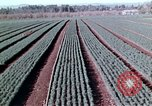 Image of reforest areas California United States USA, 1970, second 43 stock footage video 65675031952