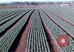 Image of reforest areas California United States USA, 1970, second 44 stock footage video 65675031952