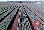 Image of reforest areas California United States USA, 1970, second 45 stock footage video 65675031952