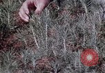 Image of reforest areas California United States USA, 1970, second 50 stock footage video 65675031952