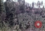Image of reforest areas California United States USA, 1970, second 54 stock footage video 65675031952