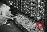 Image of chicken hatched New Brunswick New Jersey USA, 1941, second 6 stock footage video 65675032025