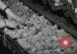 Image of chicken hatched New Brunswick New Jersey USA, 1941, second 9 stock footage video 65675032025