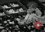 Image of chicken hatched New Brunswick New Jersey USA, 1941, second 14 stock footage video 65675032025