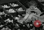 Image of chicken hatched New Brunswick New Jersey USA, 1941, second 15 stock footage video 65675032025