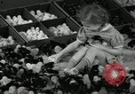 Image of chicken hatched New Brunswick New Jersey USA, 1941, second 16 stock footage video 65675032025