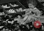 Image of chicken hatched New Brunswick New Jersey USA, 1941, second 17 stock footage video 65675032025
