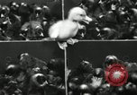 Image of chicken hatched New Brunswick New Jersey USA, 1941, second 28 stock footage video 65675032025
