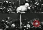 Image of chicken hatched New Brunswick New Jersey USA, 1941, second 31 stock footage video 65675032025