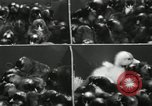 Image of chicken hatched New Brunswick New Jersey USA, 1941, second 32 stock footage video 65675032025