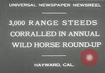 Image of annual wild horse round up Hayward California USA, 1930, second 7 stock footage video 65675032154