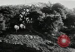 Image of annual wild horse round up Hayward California USA, 1930, second 11 stock footage video 65675032154